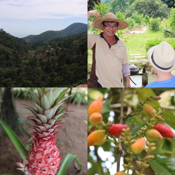 Fruit Farm_1