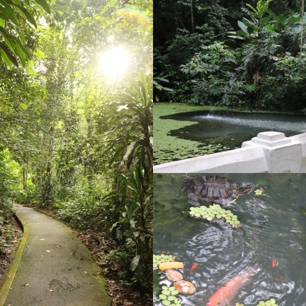 Penang Botanical Gardens_Lily Pond