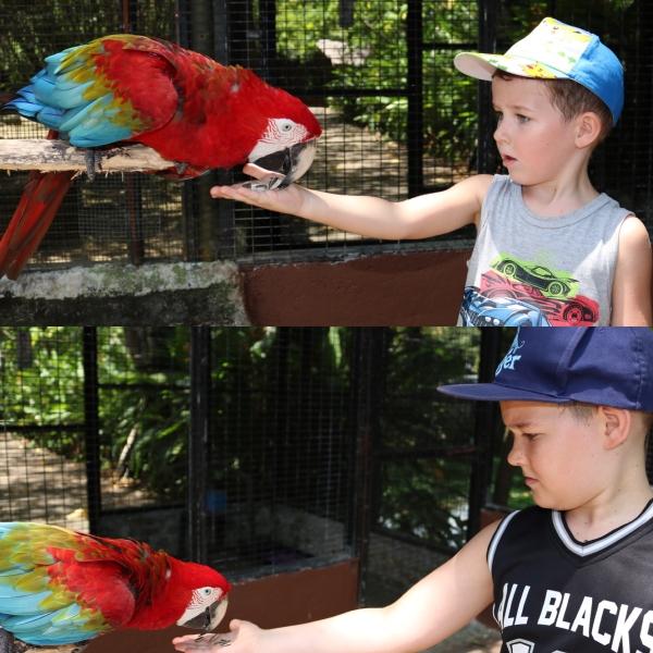 Penang Bird Park_3