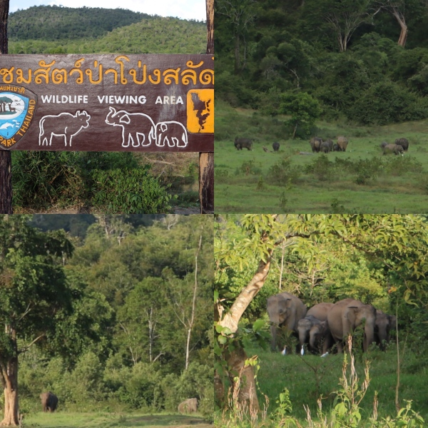 Elephant Viewing_2