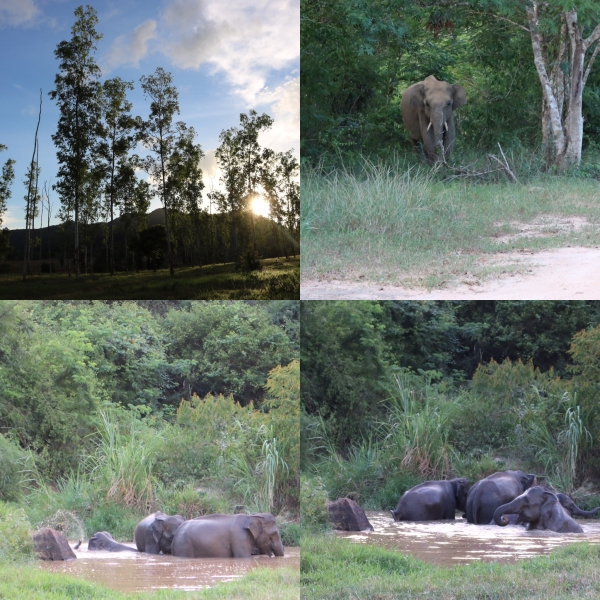 Elephant Viewing_3