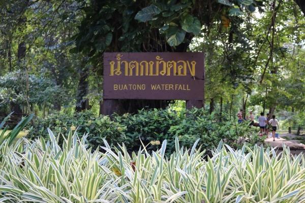 Bua Tong Waterfall Chiang Mai_1