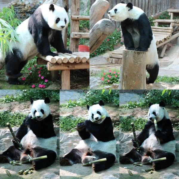 Chiang Mai Zoo_3