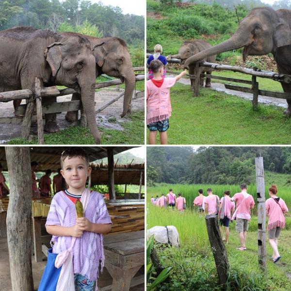Elephant Rescue National Park_2