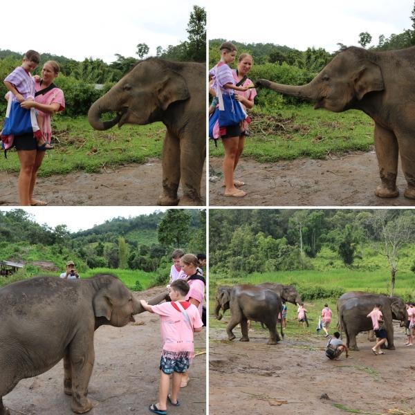 Elephant Rescue National Park_3