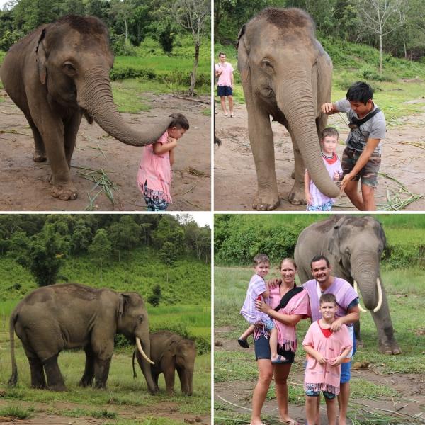 Elephant Rescue National Park_4