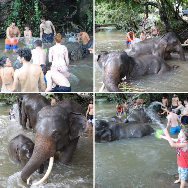 Elephant Rescue National Park_5