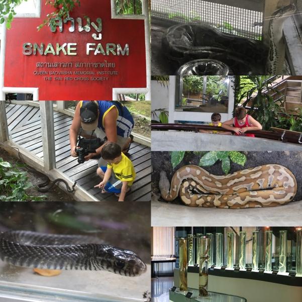 Snake Farm_1