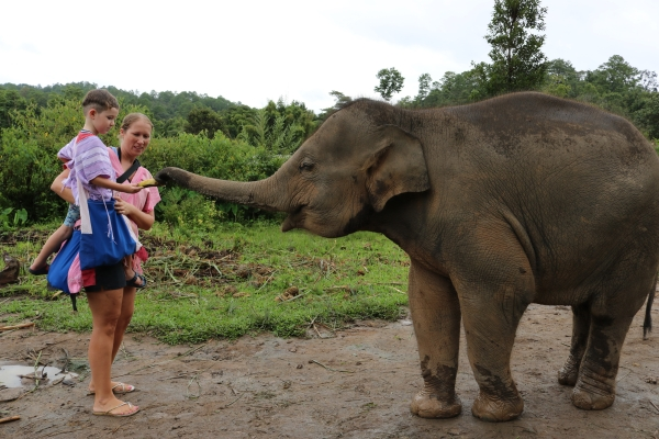 Feeding Elephants - Chiang Mai, Thailand