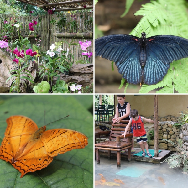Kuang Si Falls Butterfly Park