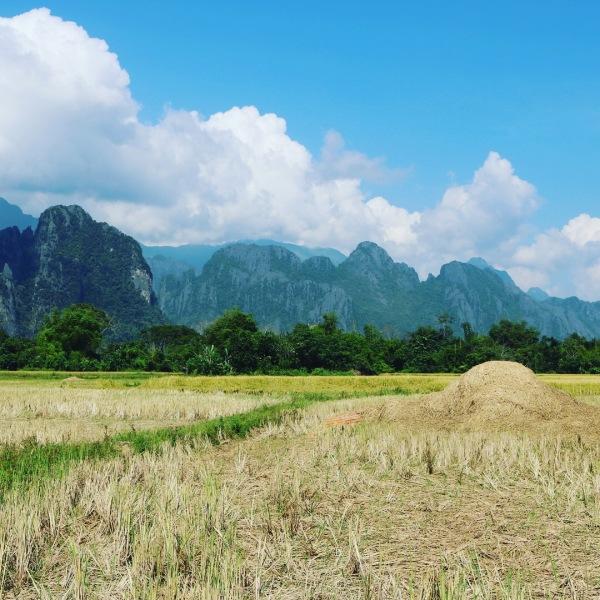 Vang Vieng_Laos_Rice Fields
