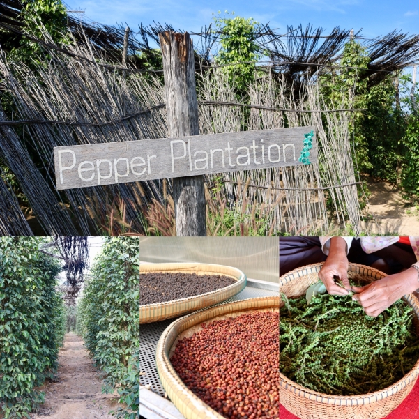 Sothy's Pepper Farm_Kampot Region_Cambodia