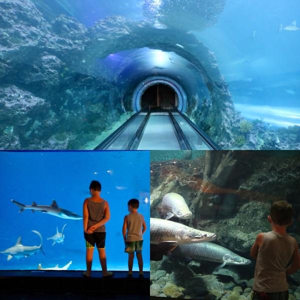 National Museum of Marine Biology and Aquarium_Kenting_Taiwan