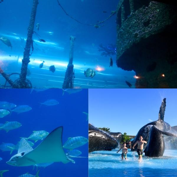 National Museum of Marine Biology and Aquarium_Kenting_Taiwan_1