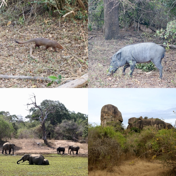 Yala National Park Safari_Sri Lanka_2