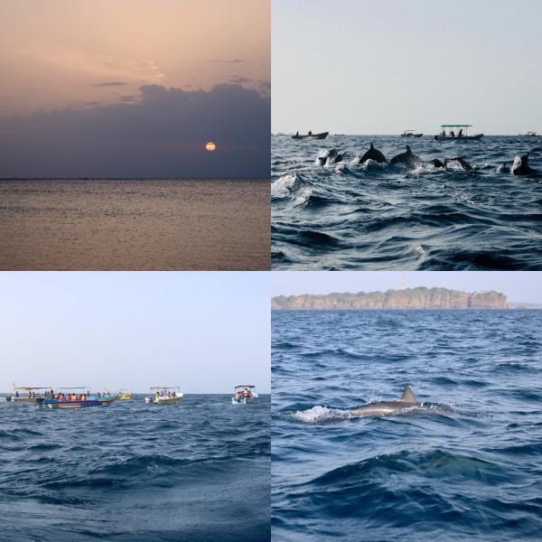 Dolphin Watching_Trincomalee_Sri Lanka