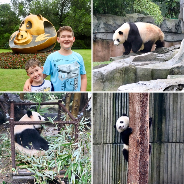 Chengdu Research Base of Giant Panda Breeding_China_1
