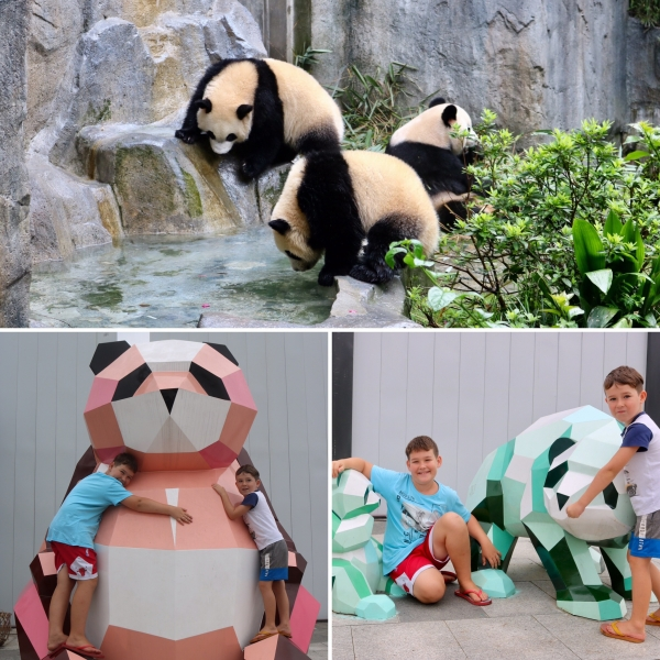 Chengdu Research Base of Giant Panda Breeding_China_3