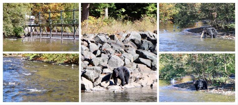 quinsam river hatchery_campbell river_vancourver island_bc_canada