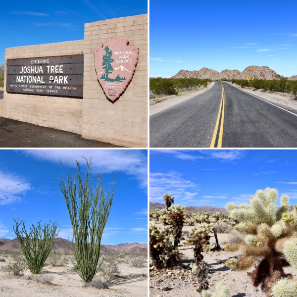 Joshua Tree National Park_California_America