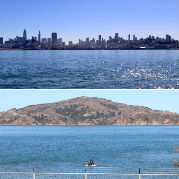 San Fransisco Bay_California_America