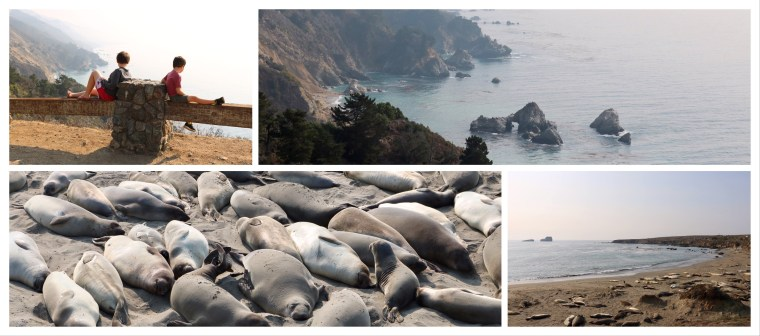 San Simeon elephant seal rookery_Pacific Coast Highway_California_America