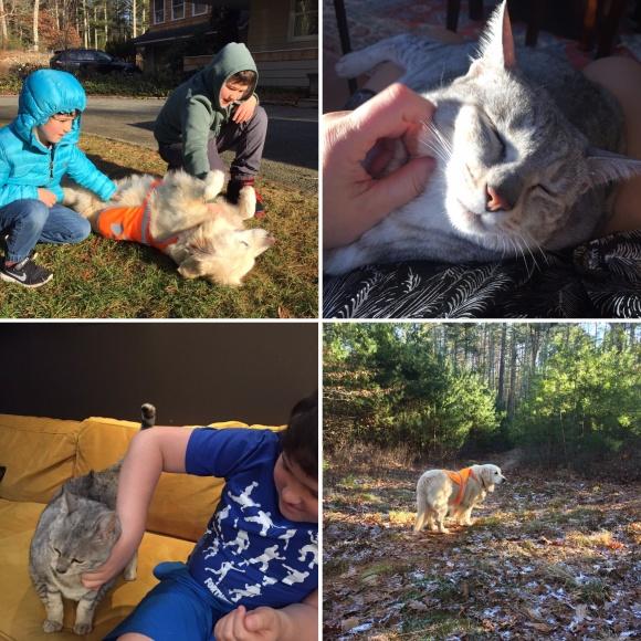 Petsitting Lucy & Sadie_Exeter_Rhode Island