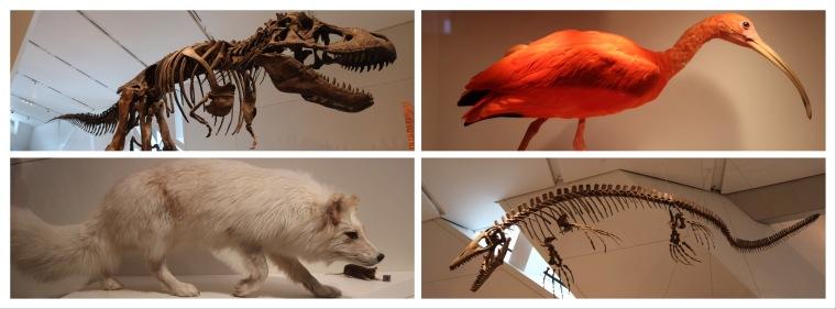 ROM_Royal Ontario Museum_Toronto_Ontario_Canada_1